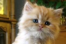 AF's Cats / Polter Simon : eu tenho um Garfield dentro de casa. Filó, minha guardiã na frente de casa ! Gato : um ser egoísta, egocêntrico e que gera paixão infindável.