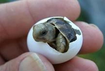 AF's Turtles / De gerações à gerações.