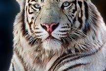 AF's Animals / A expressão viva de Deus.