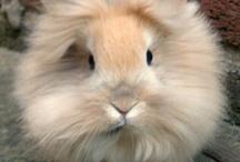 AF's Bunny