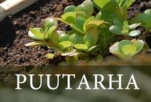Puutarha / Oma puutarha tuo myöskin yrityksen pöydälle tuoreita vihanneksia päivittäin.