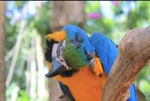 FEATHERED FRIENDS / Exotic Parrots