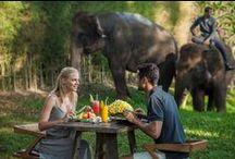 BREAKFAST WITH ELEPHANTS