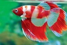 Fish I Like!