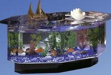 Incredible Aquariums!