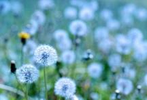 Herbs = Vitality / by Sara Molck