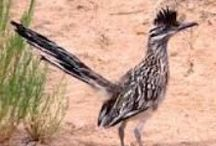 Roadrunners and Others / by Dorothy Kalthoff