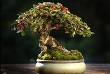favorite bonsai