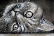 CATS, CATs, CAts, Cats and cats! ♥ / I am a CATLOVER! ♥ ♥ ♥