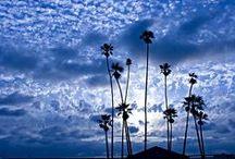 palm trees palm dreams
