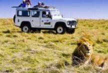 Wycieczki do Kenii / Kenia to kwintesencja Afryki – dzikie zwierzęta, safari, wspaniałe widoki. Znajdziemy tu wszystko co ma do zaoferowania Czarny Ląd, dlatego warto tu przyjechać i zobaczyć wszystkie atrakcje na własne oczy. Zapraszamy!