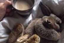 19 // Flopscotch + Friends / Bunny rabbit things...