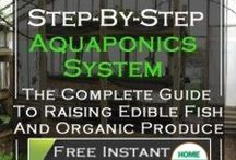 Green Aquaponics / How to built an aquaphonics system pins are welcome. If you pin to this board, we may move it. It will be moved to the specific subject of your pin or deleted if it is a duplicate or advertising. This board is a group board on which the community is welcome to pin. You can request the specific boards we have moved your pin and we will send it to you and we both can pin according to our common interest.  Only family friendly pins & no political, pornography, or religion pins.