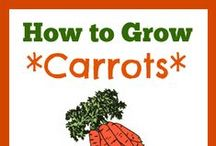 Cool  Carrots / How to grow carrots