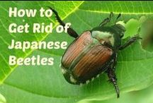 Pest Eliminate Bugs Organically / How to eliminate bugs organically.  How to attract bats to control mosquito.