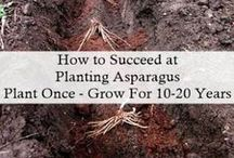 Cool Asparagus / How to plant and grow asparagus pins are welcome. If you pin to this board, we may move it. It will be moved to the specific subject of your pin or deleted if it is a duplicate or advertising. This board is a group board on which the community is welcome to pin. You can request the specific boards we have moved your pin and we will send it to you and we both can pin according to our common interest.  Only family friendly pins & no political, pornography, or religion pins.