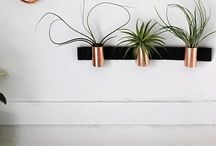 Plant vessels. / Pots and plant hangers and anything else related.