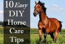 Animals Horses / How to care for horses