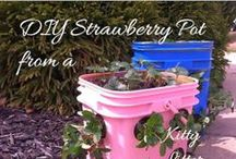 Deck Strawberries / How to grow Strawberries in Containers pins are welcome. If you pin to this board, we may move it. It will be moved to the specific subject of your pin or deleted if it is a duplicate or advertising. This board is a group board on which the community is welcome to pin. You can request the specific boards we have moved your pin and we will send it to you and we both can pin according to our common interest.  Only family friendly pins & no political, pornography, or religion pins.