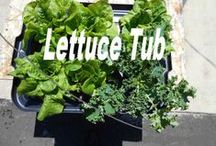 Deck Lettuce / How to grow lettuce on the Deck