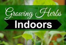 Deck Herbs