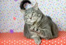 CAWS Adoptable Cats / Community Animal Welfare Society (CAWS) Adoptable Cats in Utah