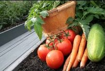 edible gardening / Organization for personal use of links found on Pinterest. I take no credit for anything other people have typed. I only save things I find that I think are nice and organize them here. / by Abigail Nieuwenhuis