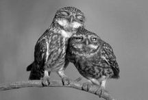 Süße Tierwelt