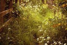 Obstwiese / Streuobstwiese und Labyrinth im Bagua 4