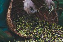 Spanisches Olivenöl / Olivenöl ist kein Nahrungsmittel. Es ist eher ein Sehnsuchtsmittel. Man denkt dabei an einen lauen Sommerabend in einer lauschigen Trattoria. An Sonne, Meer, knorrige, urwüchsige Bäume und sonnengegerbte Gesichter. Wenn wir den grüngoldenen Saft über unseren Salat oder unsere Pasta träufeln, fließt unser Traum von einem einfachen, gesunden Leben mit.