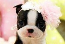 Lovely animal pictures!