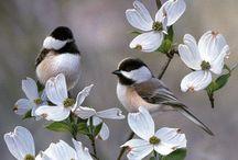 Foto's / Zo schattig, zo prachtig :-)