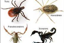 Other arachnids