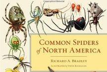 Spider books (scientific)