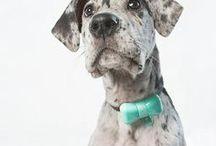 WonderWoof BowTies for Dogs