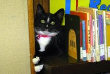 Library Cats / by Belmont Public Library