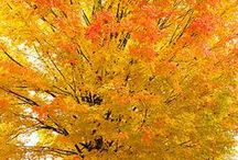 Autumn  / by Belmont Public Library
