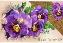 Violets and Pansy themed stuff
