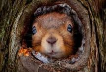 Ihanat oravat