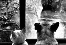 It rains!!! / ~ Into each life, some rain must fall. / by Meaow \(¥__¥)/\(@__@)/~**Hi