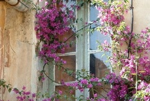 Charming Windows and Doors