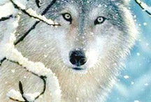 Fascinating Wolves