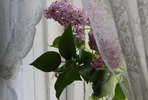 Delightful Lace Curtains