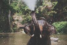 《《Faune》》 / Beatiful animals :-) minus the humans