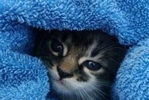 Kit-Kat / Anything feline