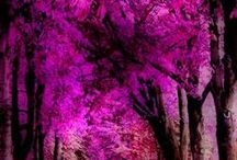 Pantone Colour 2014 Radiant Orchid / Enchanting, dazzling, expressive, creative, captivating, harmony, love and magical warmth.