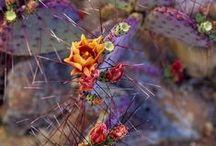 Cactus / Cactus love