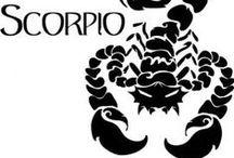 Scorpion !