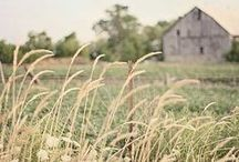Prairie / Lifestyle, homesteading, recipes, fashion. Little house.