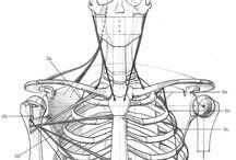 Anatomy / 解剖学(資料)